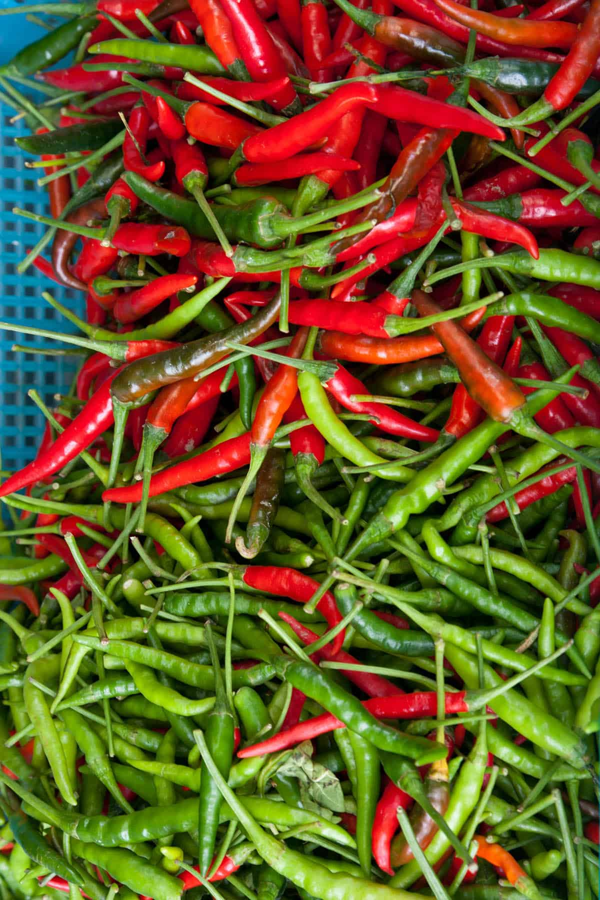 Tabasco Peppers