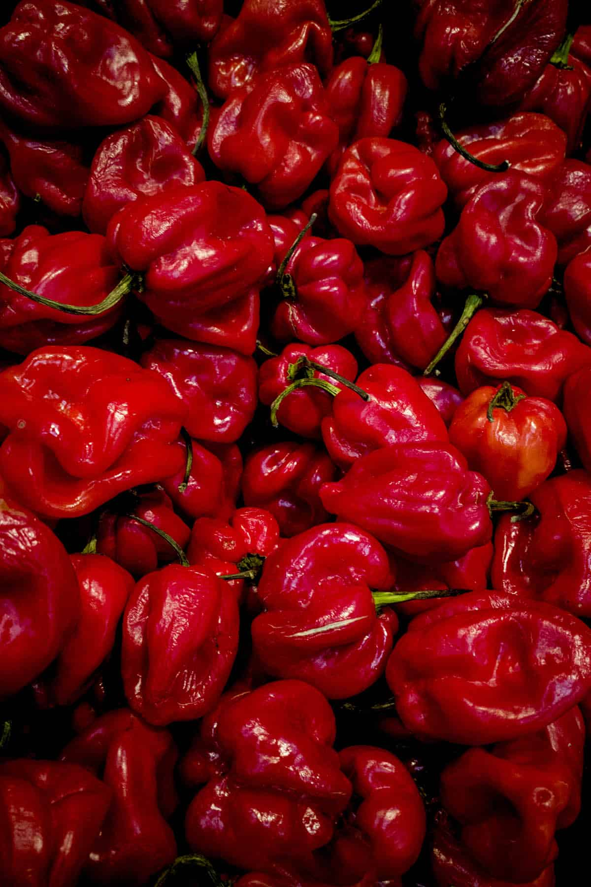 Caribbean Red Chili Peppers