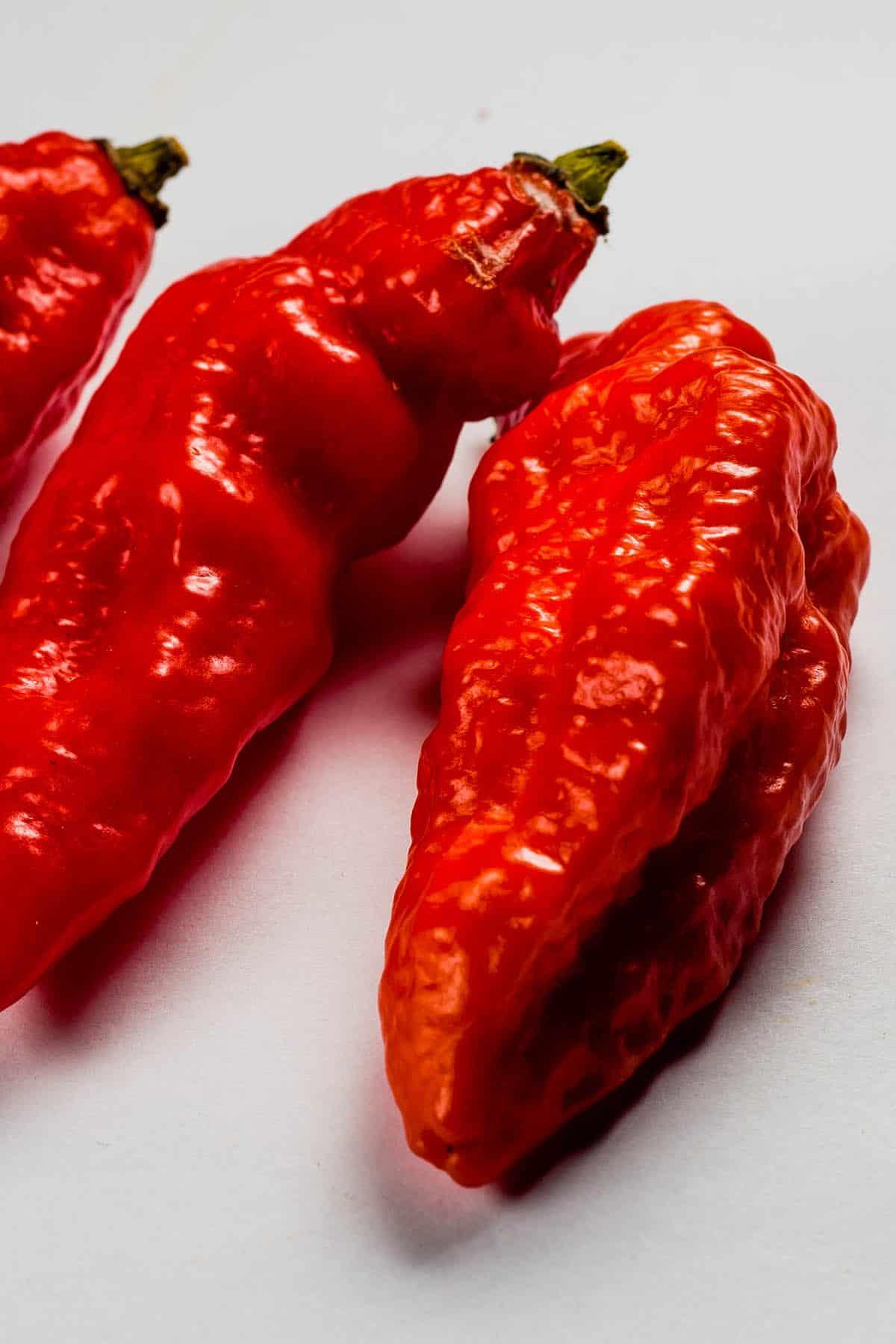 Gibralta / Spanish Naga Chili Peppers