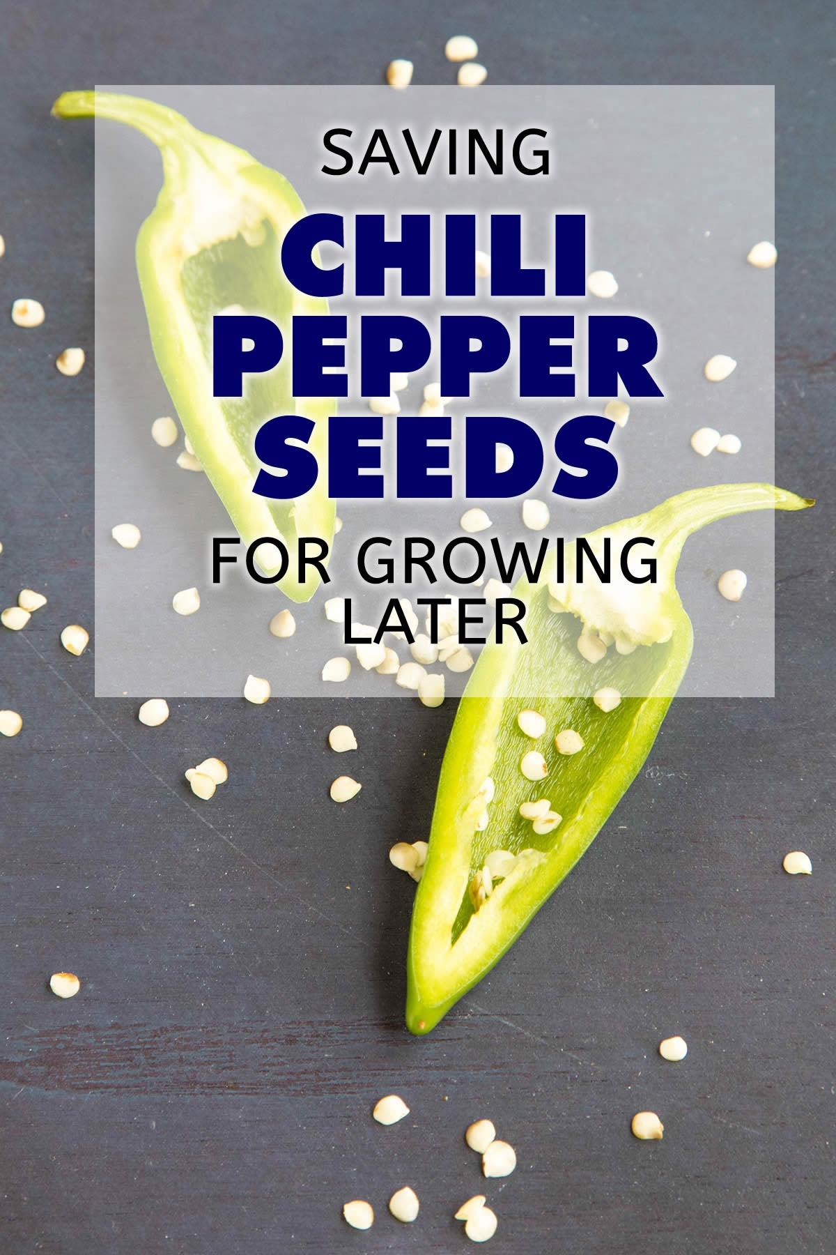 Saving Chili Pepper Seeds for Growing Later