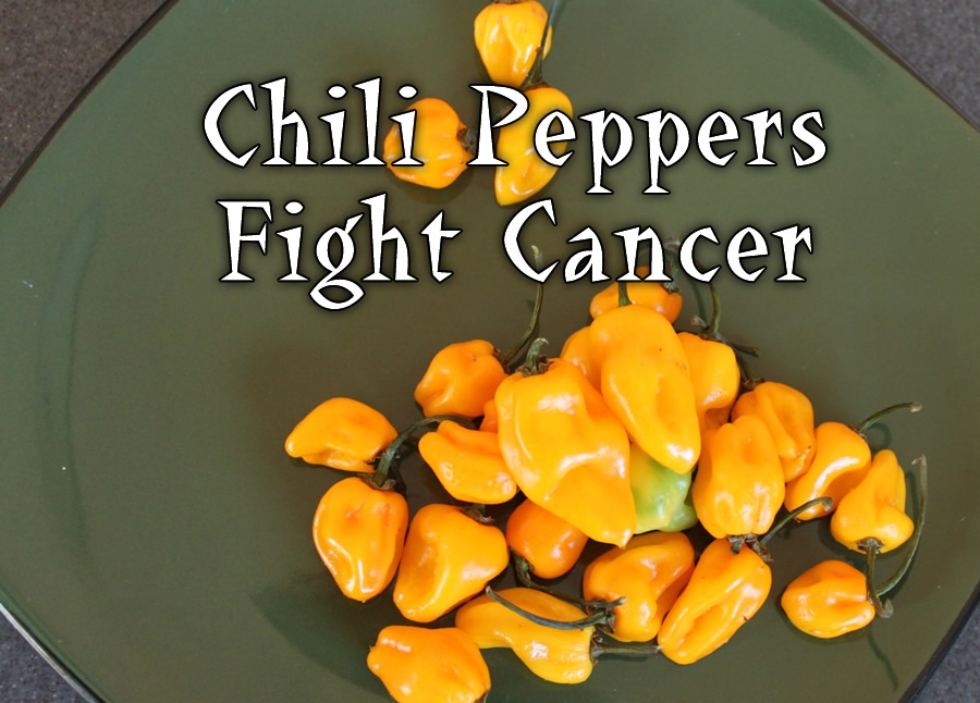 Chili Peppers Fight Cancer