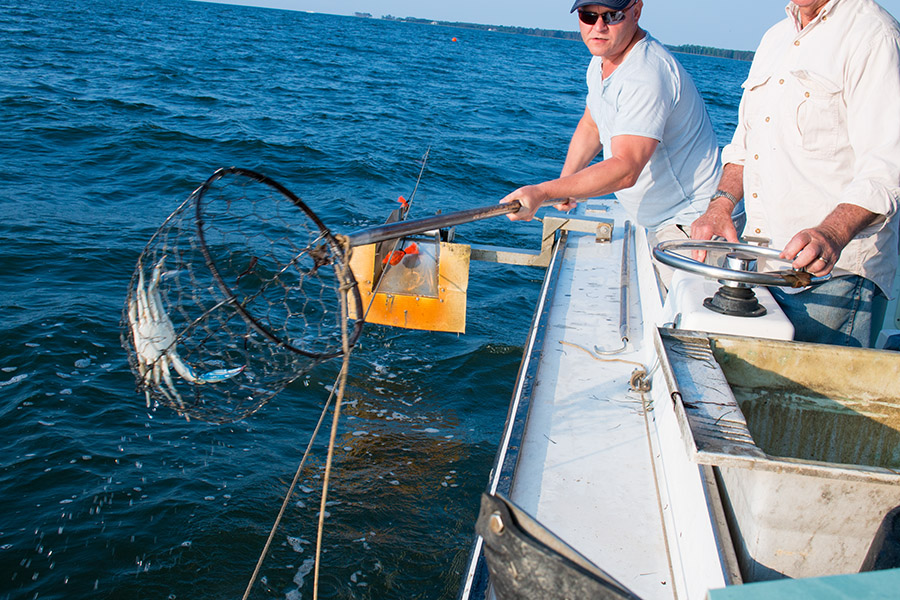 Mike catching blue crab in the Chesapeake Bay