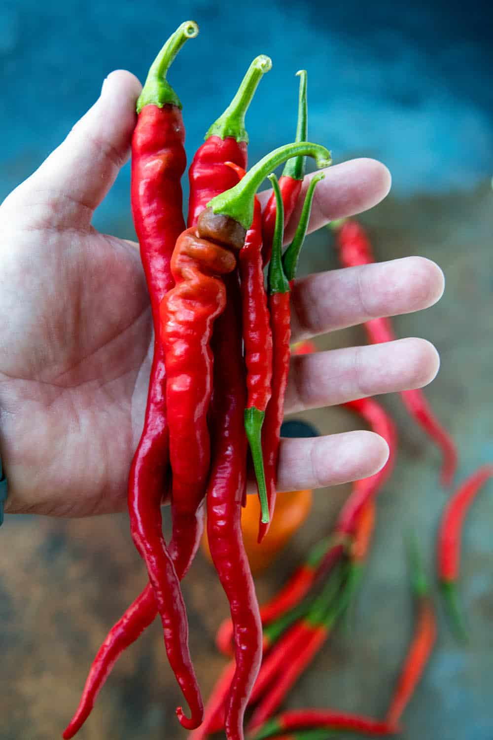 A handful of Cayenne Peppers