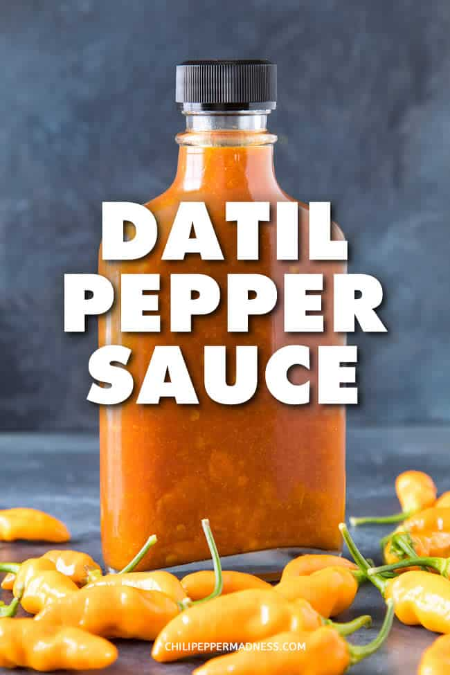 Datil Pepper Sauce - A flavorful hot sauce recipe made with fiery datil peppers, tomato paste, vinegar and honey, with a few extra spices tossed in for flavor. This might be your new favorite hot sauce! #HotSauce #Sauce #Spicy #Datil