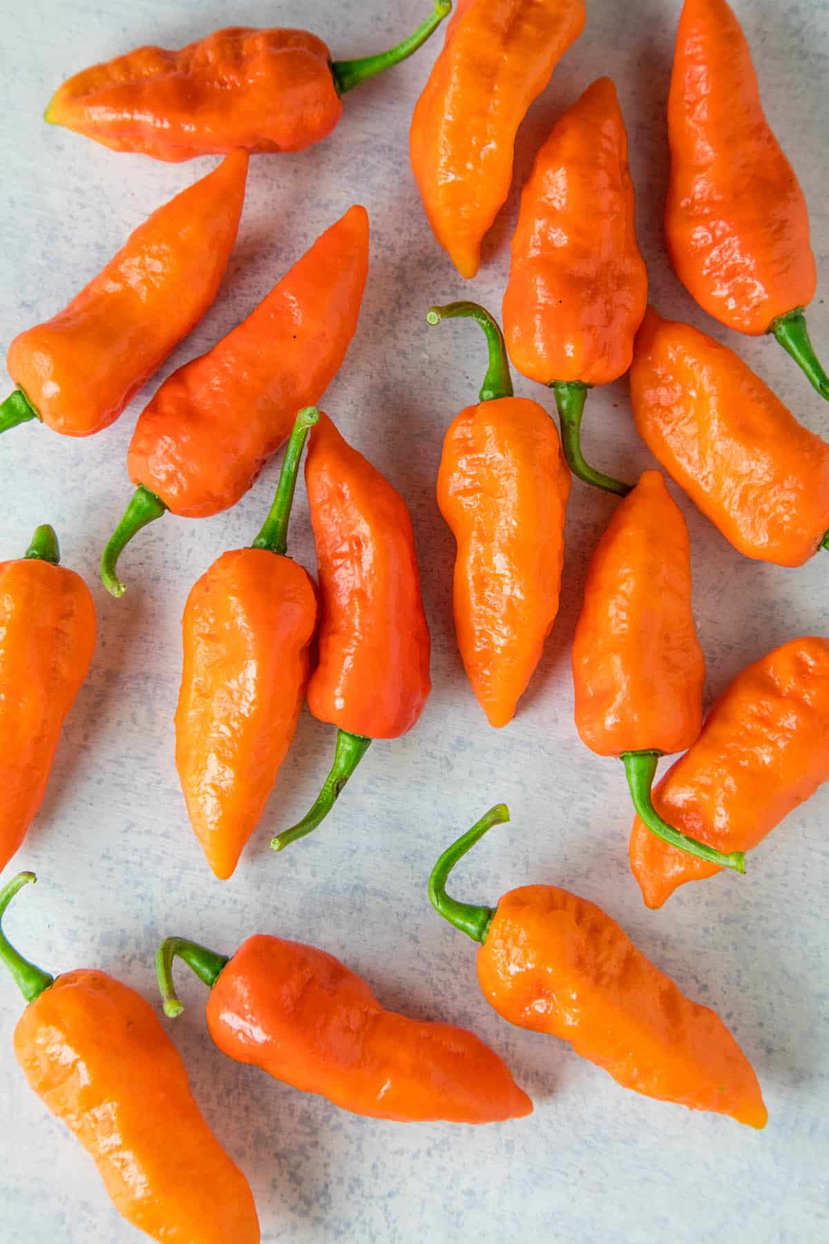Ghost Pepper (Bhut Jolokia) – All About Them