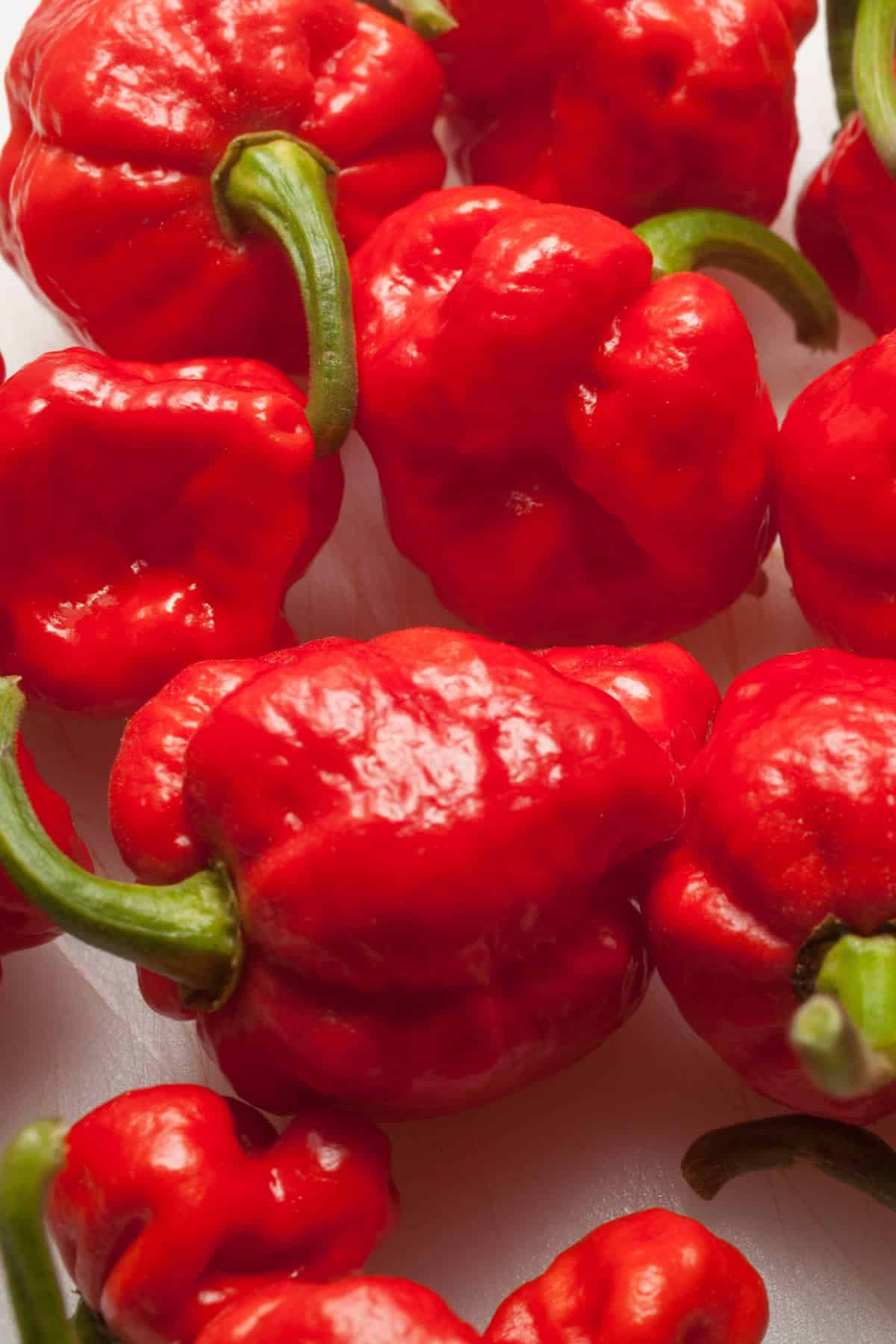 Trinidad Moruga Scorpion Pepper: All About It