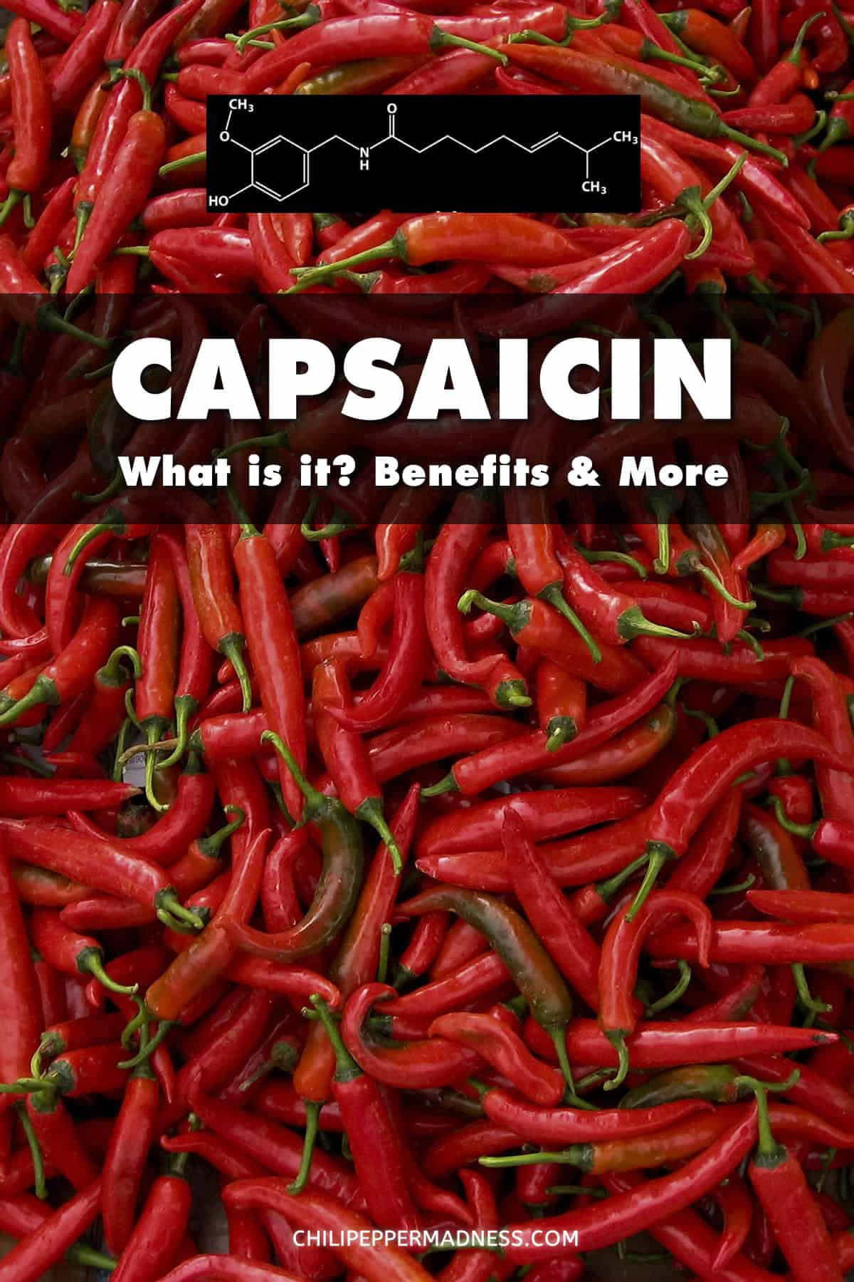 What is Capsaicin? Heat Level, Health Benefits and More - Capsaicin is a chemical component of chili peppers that give them their spicy heat. Though widely popular for spicy food lovers, it also offers certain health benefits and pain relief. Learn more about capsaicin below.