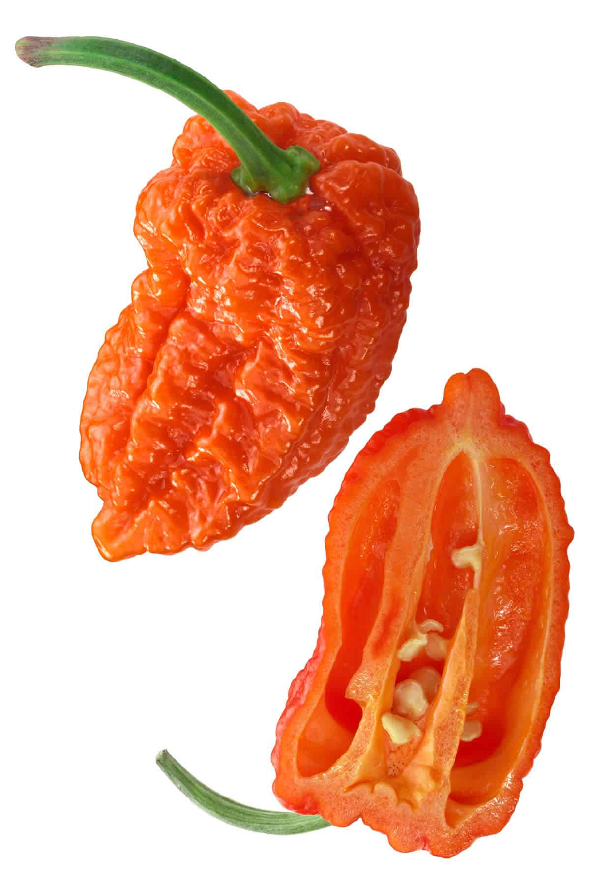 Naga Morich: Superhot Pepper from Bangladesh