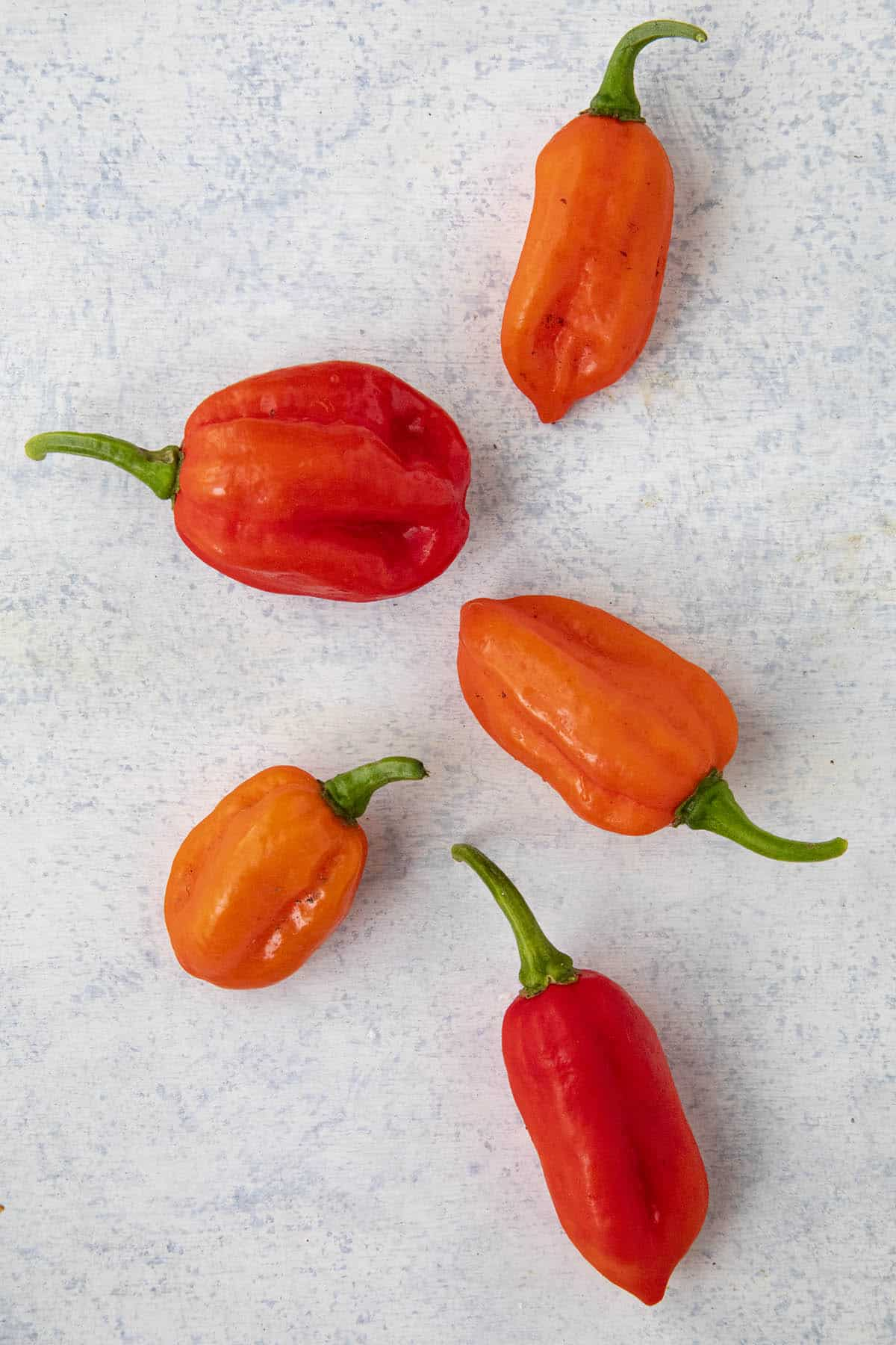 HOT CHILLI PEPPER-DEVIL/'S TONGUE YELLOW 10 Semi Finest