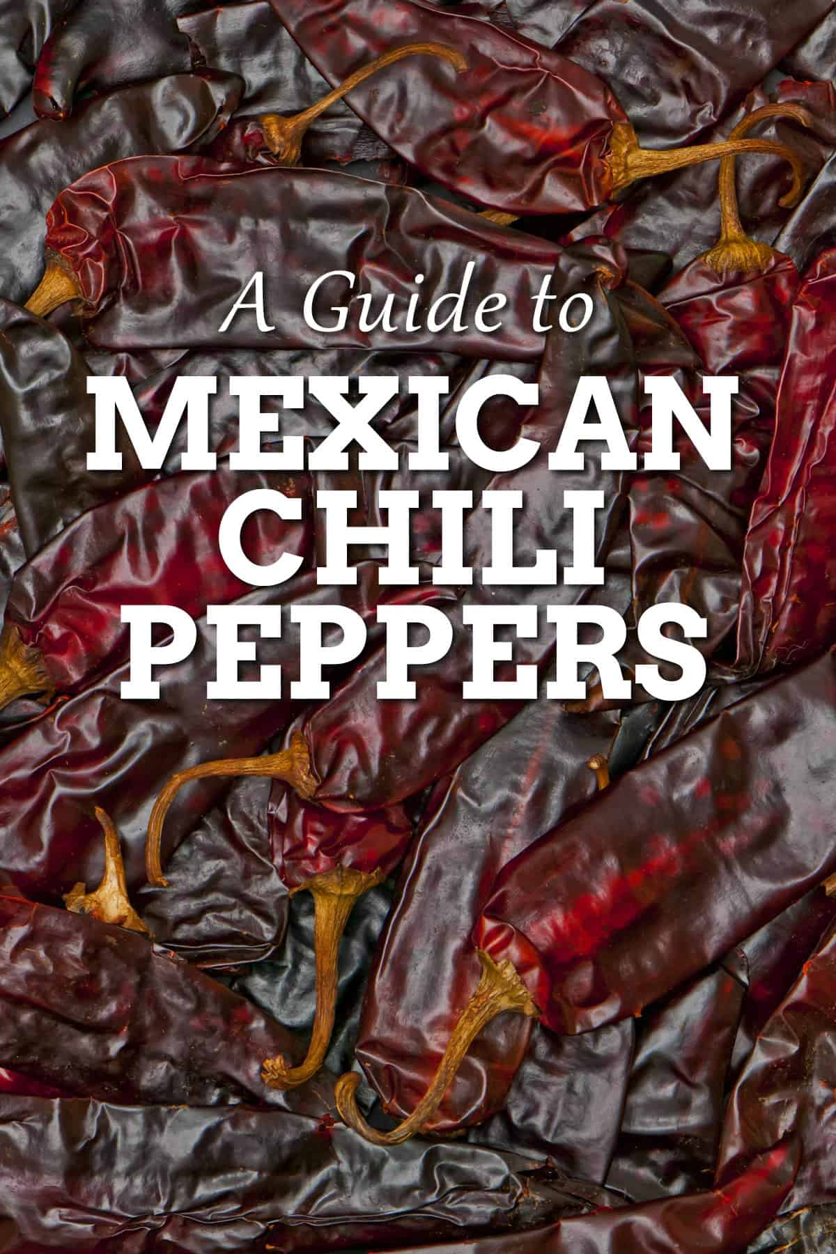 A Guide to Mexican Chili Peppers